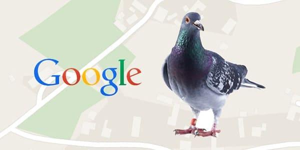 الگوریتم کبوتر گوگل چیست؟ | pigeon algorithm گوگل | الگوریتم کبوتر در سئو